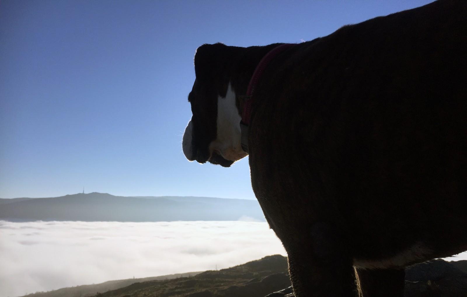 IVRIG TURGJENGER: Pål Bentdal og hunden er ivrige turgjengere. – Det er slike dager man husker, sier han.