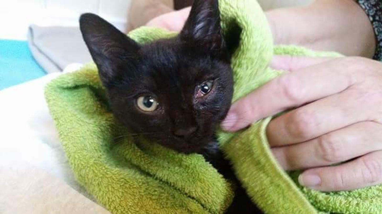 Her er en kattunge med øyeinfeksjon fanget ved Nevlunghavn