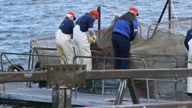 Arbeid med fiskereiskap har vore og er ein viktig del av historia i Vågsøy. Foto: Ottar Starheim, NRK.
