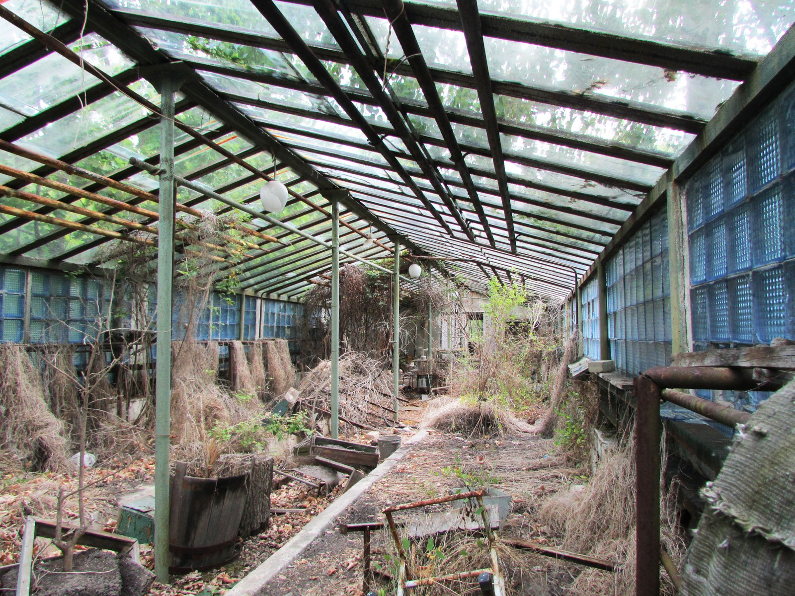 Etter hvert som Pripyat gror til er det ikke store forskjellen på inn- og utsiden av drivhuset.