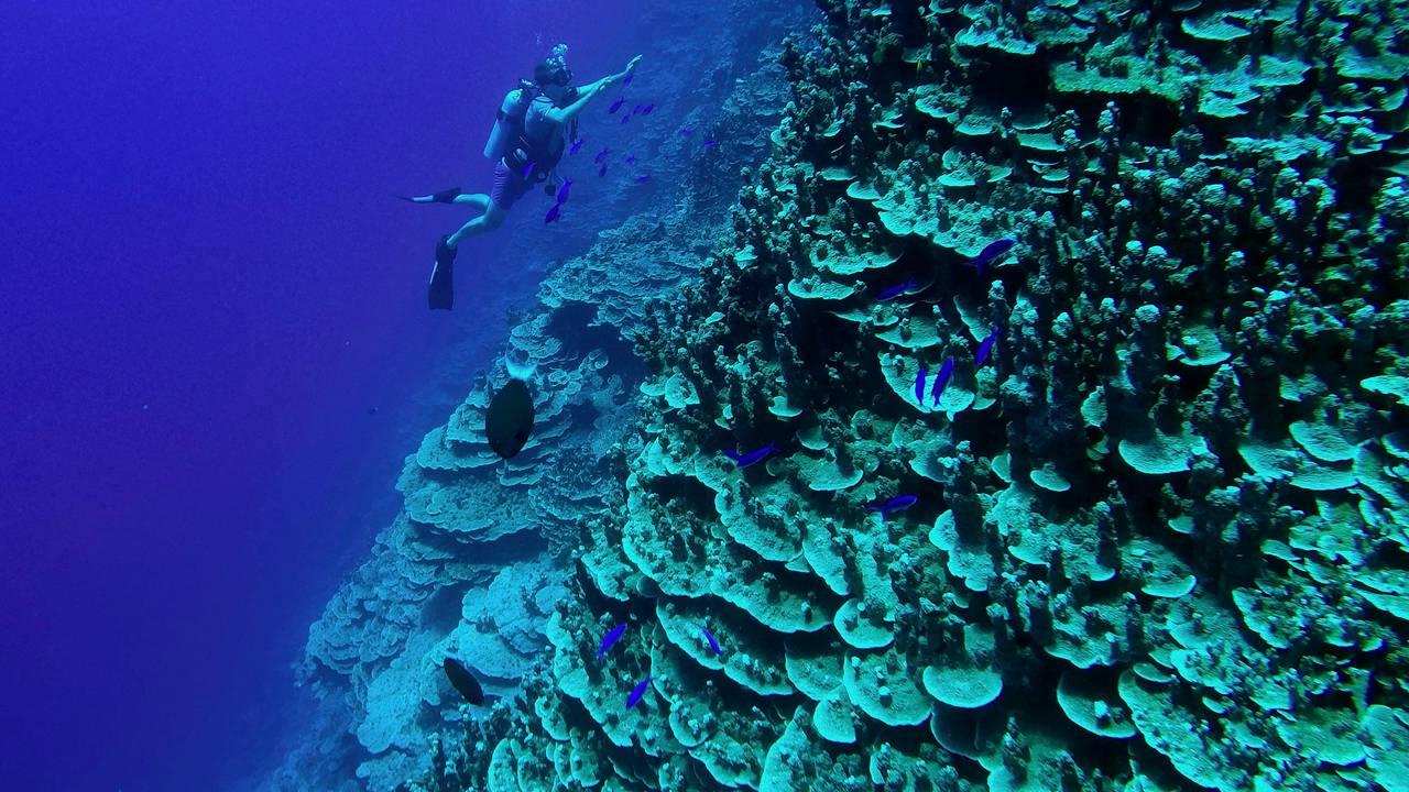 Korallrev utenfor Majuroatollen på Marshalløyene.