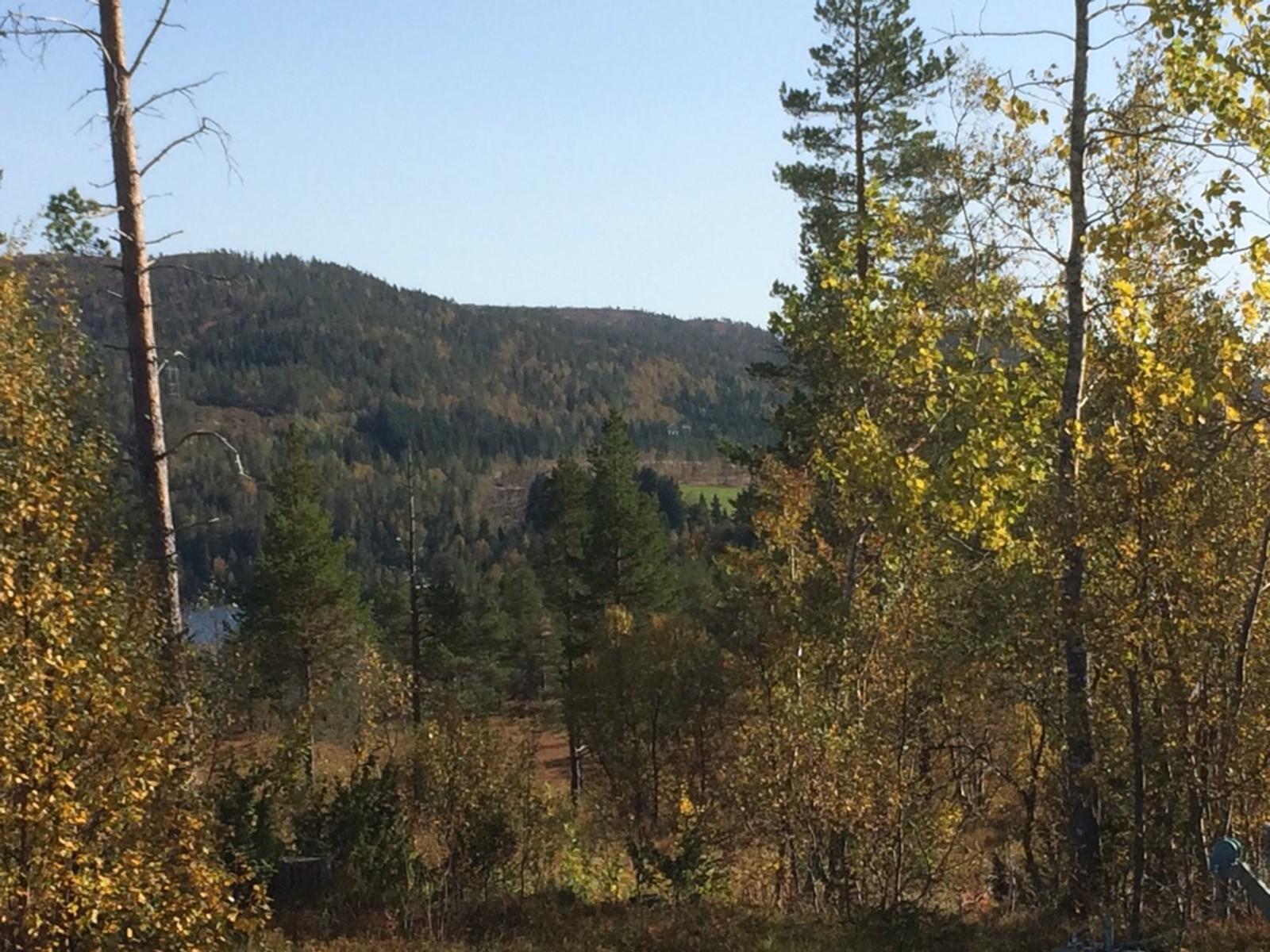 Fantastisk vêr i Rindal. 19 grader, sol og fine haustfargar.