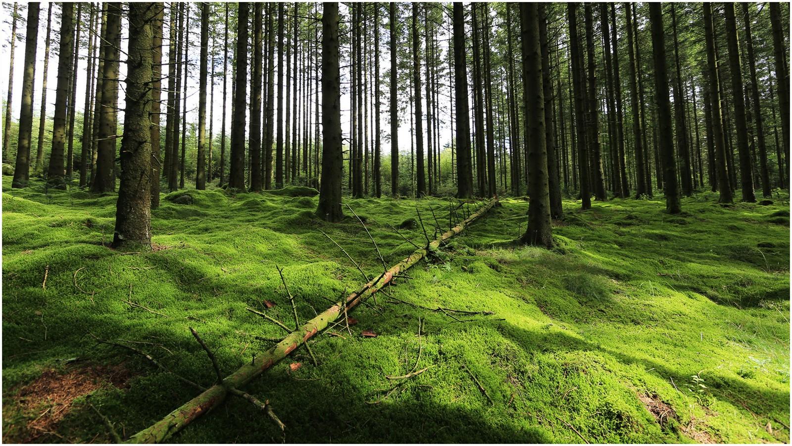 Njåskogen i Time