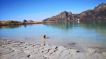 VARMT I NORD: Det vil bli mer behagelige temperaturer i Nord-Norge til helga. her bader en hund på en strand ved kyststien i Bø i Vesterålen