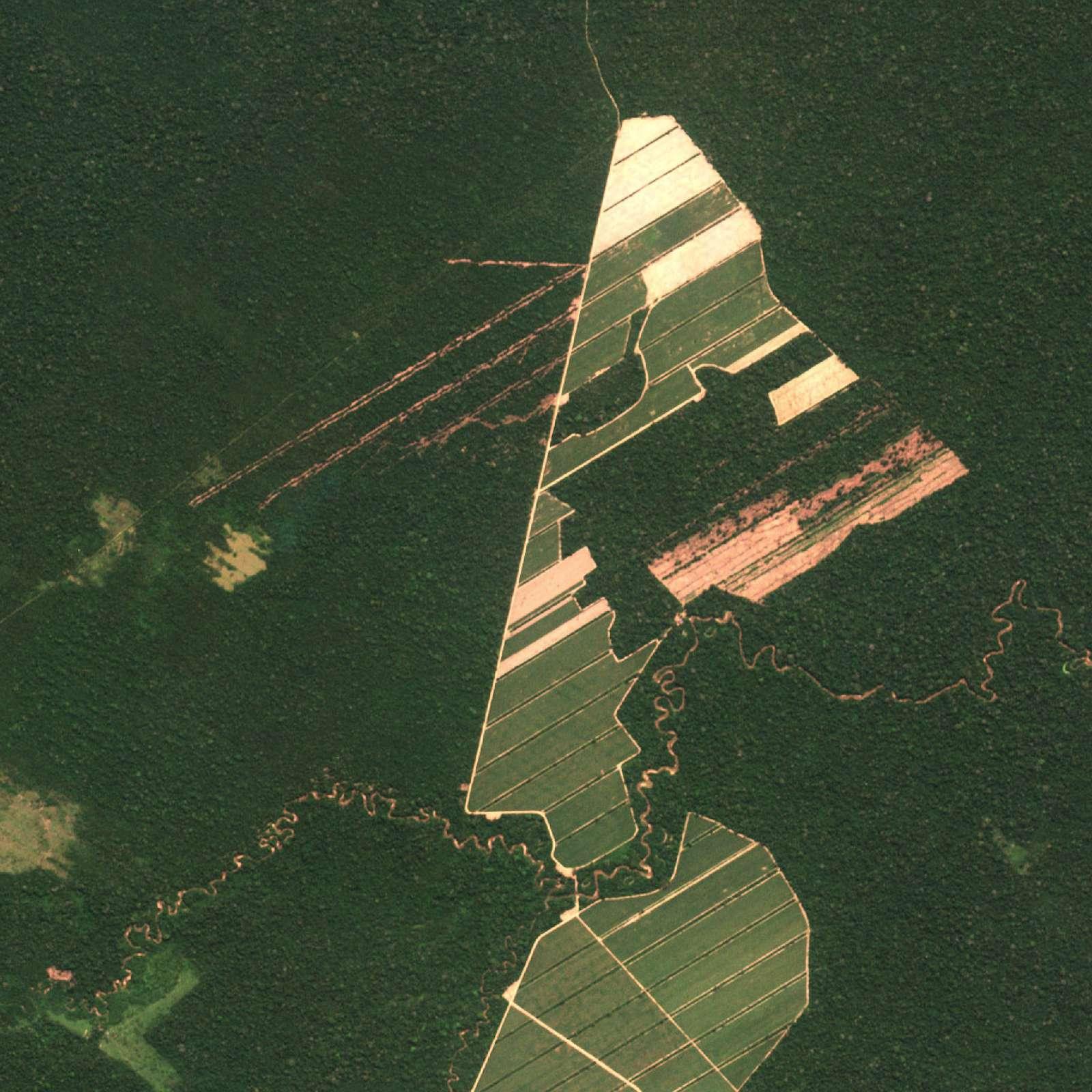 Striper av nedhugget skog kan sees i det høyoppløste satellitt-bildet.