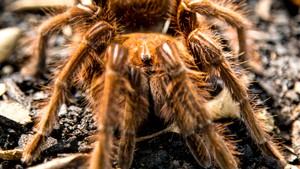 Utrolige edderkopper