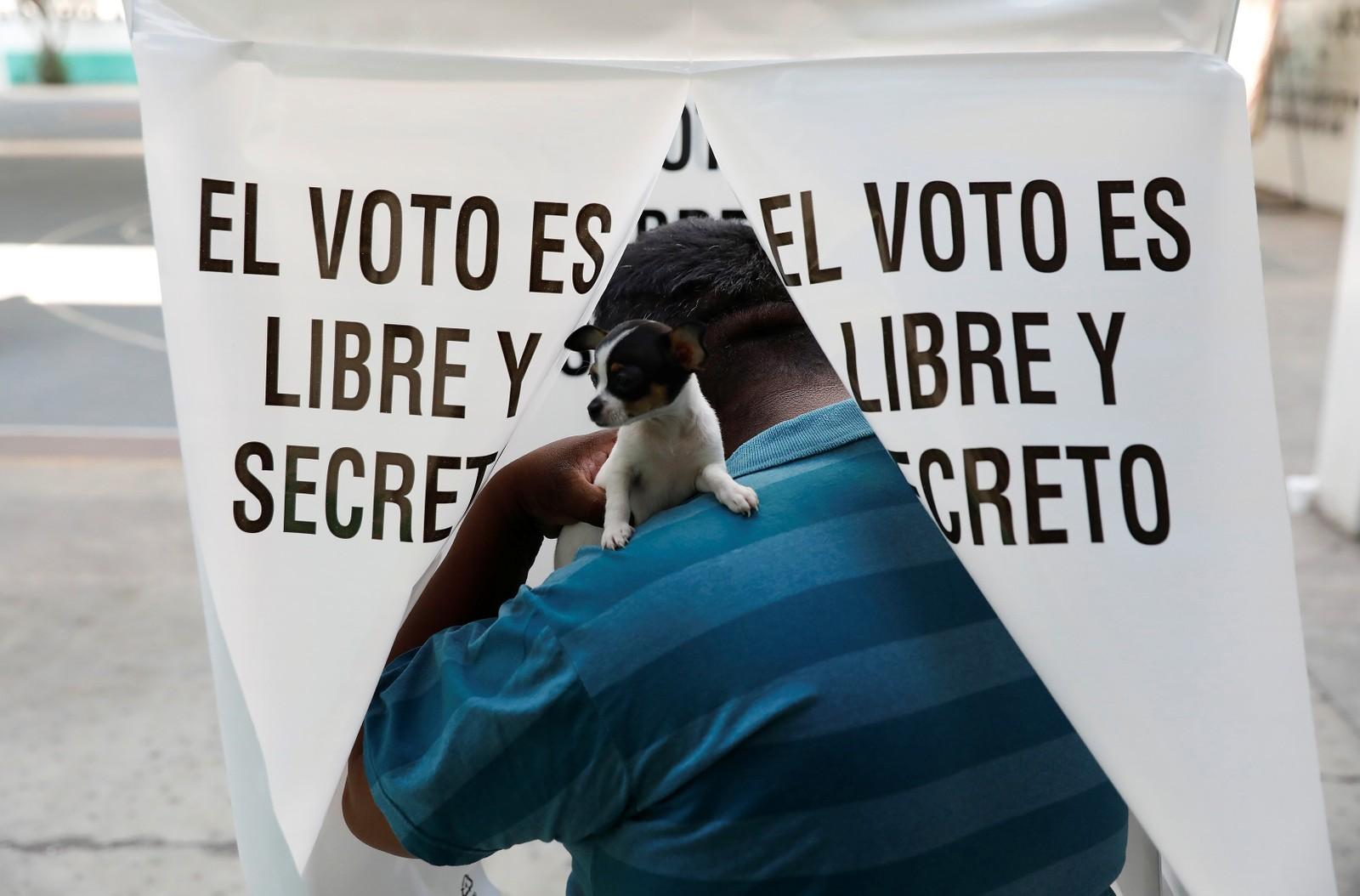 Hva eieren stemte under søndagens guvernørvalg i Mexico virka det som denne hunden ga katten i.