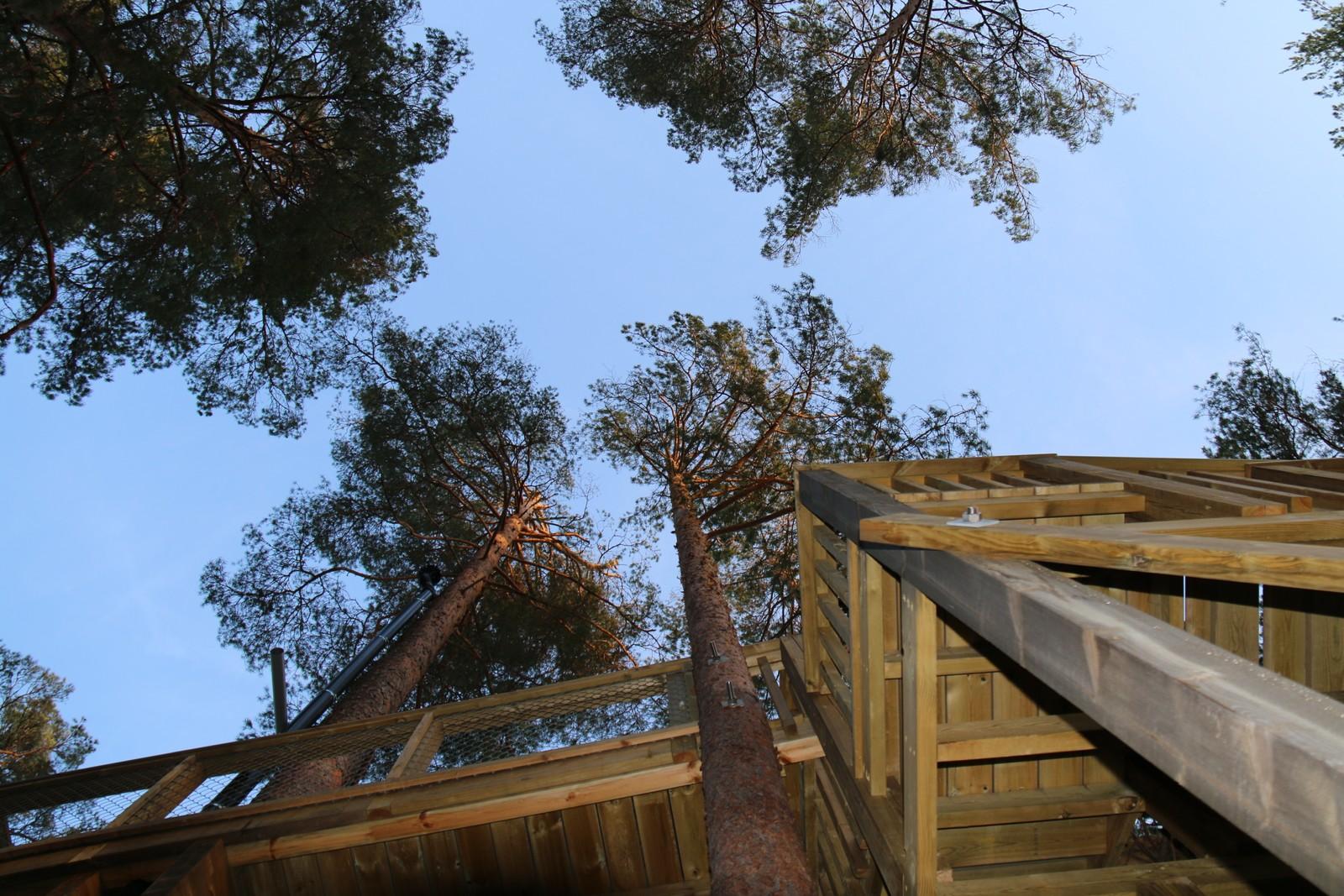 Furutrær fungerer som grunnmur.