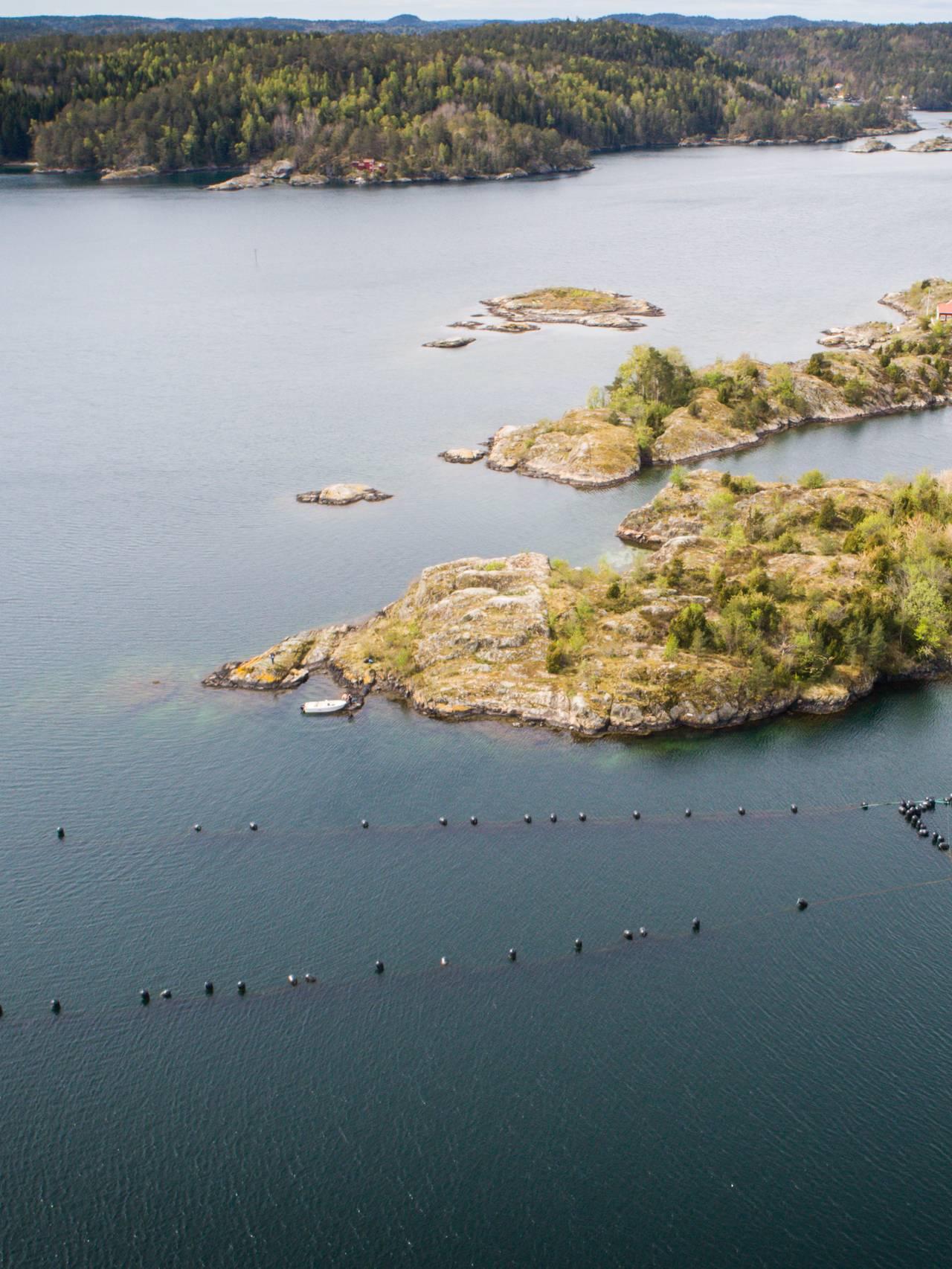 Agder mussels anlegg for blåskjell. Gjeving utenfor Risør.