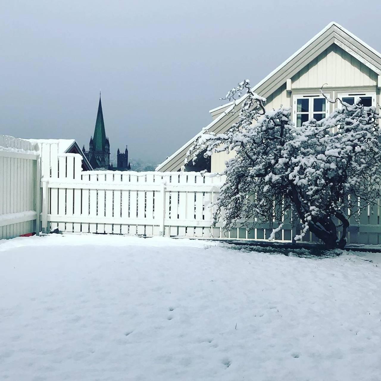 Snø i mai. Plena, treet og gjerdet i denne hagen er dekket av snø. Nidarosdomen i bakgrunnen.