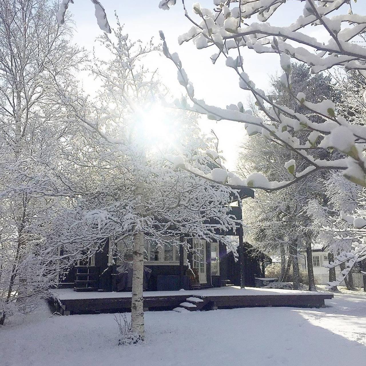 Et hus med trær foran, dekket i snø.