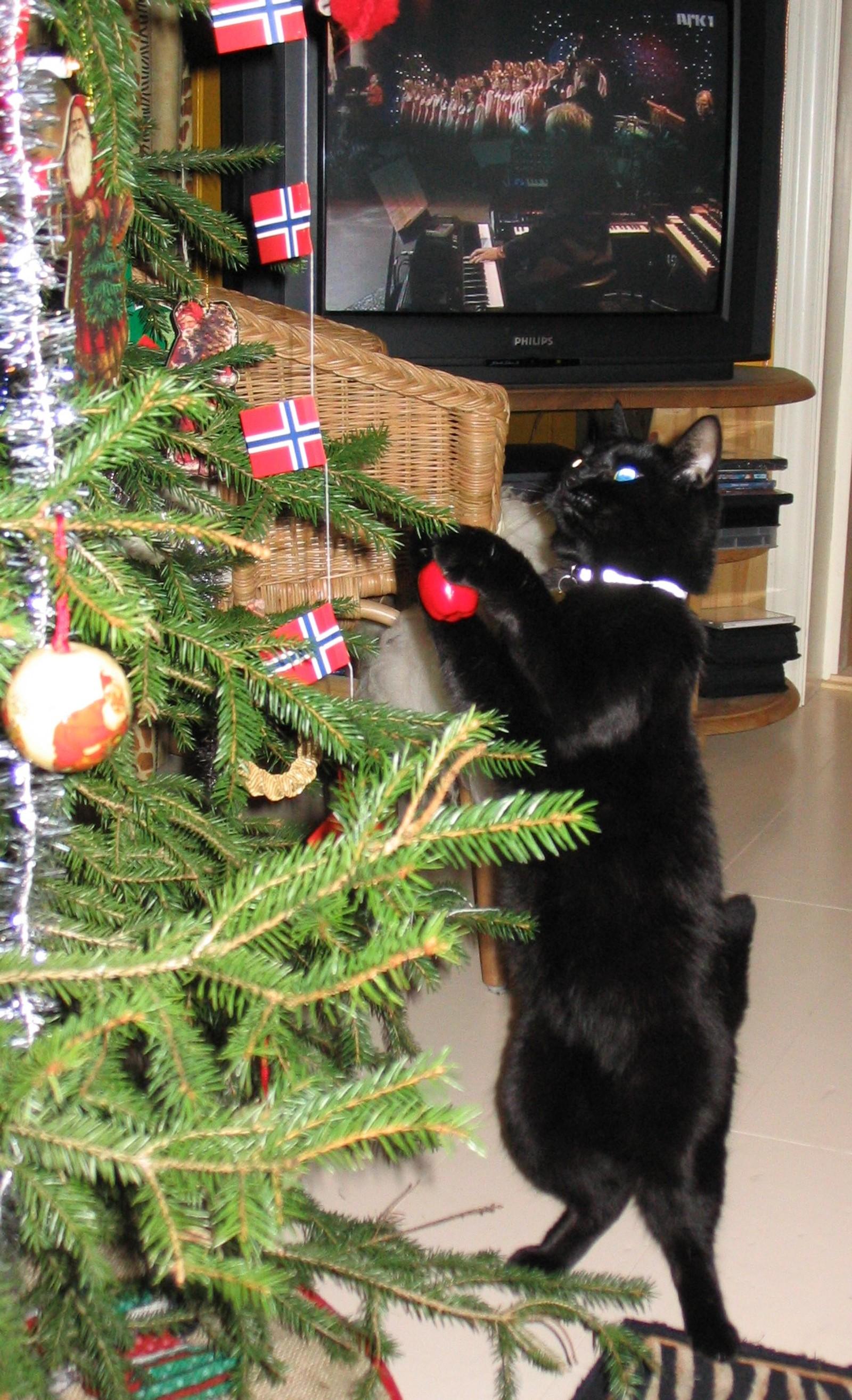 Frøya pynter juletreet.