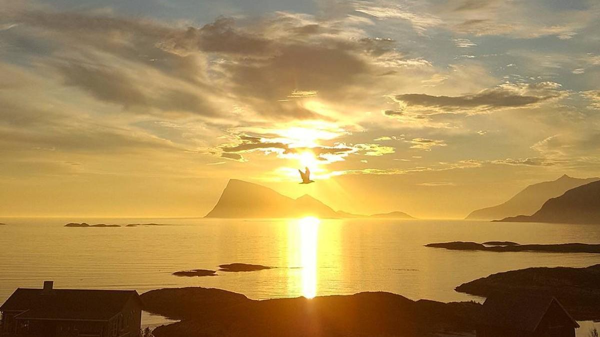 Sommerøya i Troms - Foto: @the_ludvigsen/Instagram