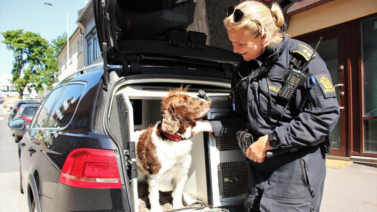 Hundevennlig sommer – NRK Vestfold og Telemark – Lokale