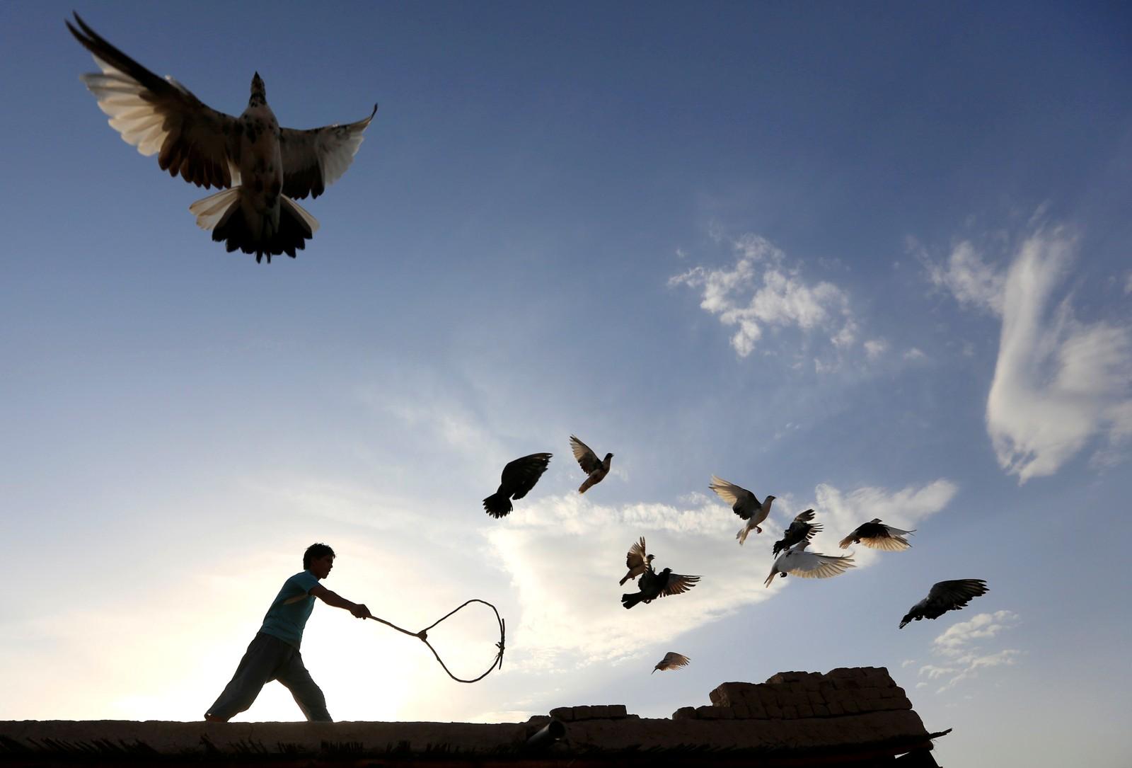 En mann forsøker å samle sammen duene sine på et hustak i Nangarhar i Afghanistan.