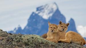 Det ville Patagonia: 1. Ild og is