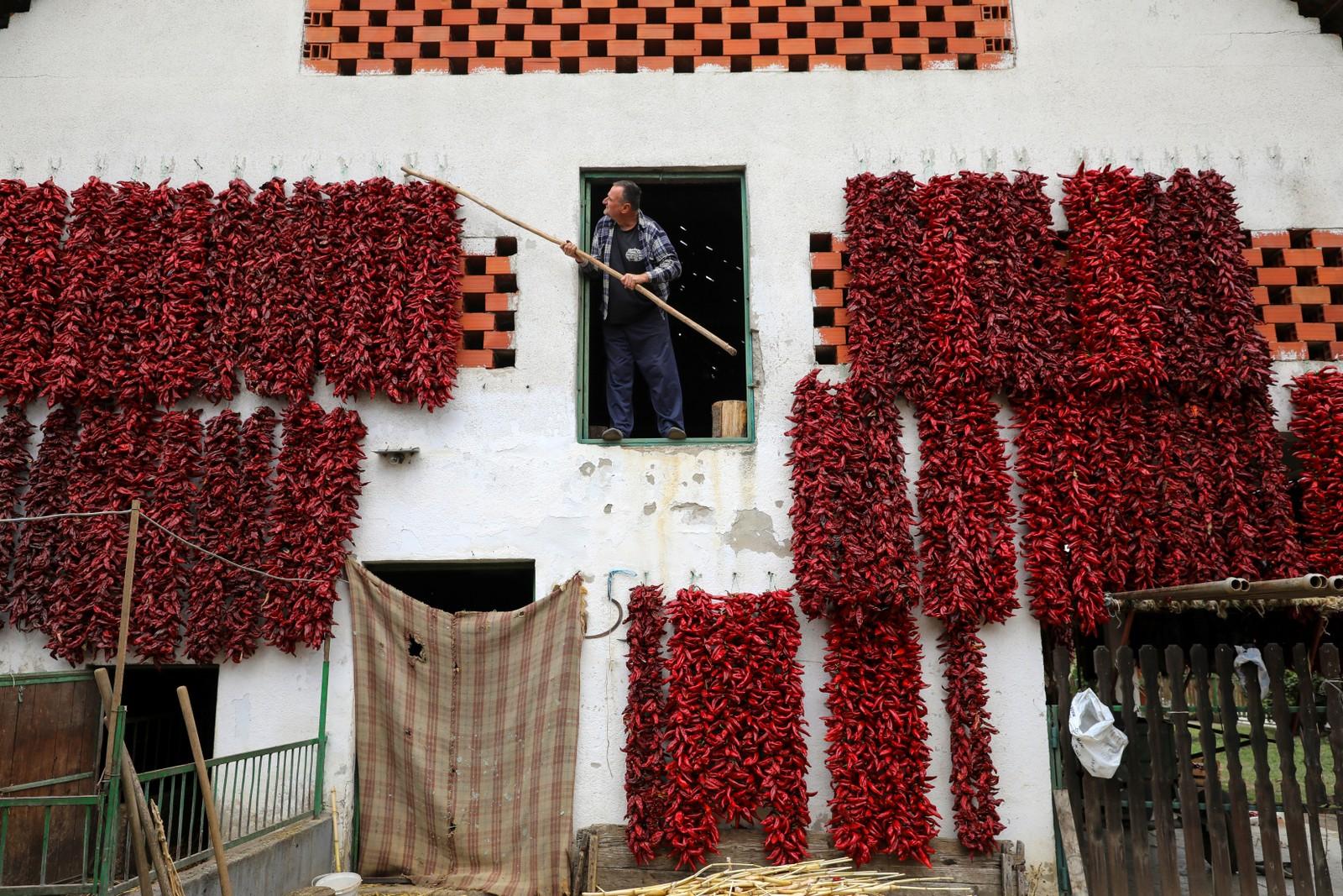 Her tørkes chili på veggen i landsbyen Donja Lakošnica i Serbia.