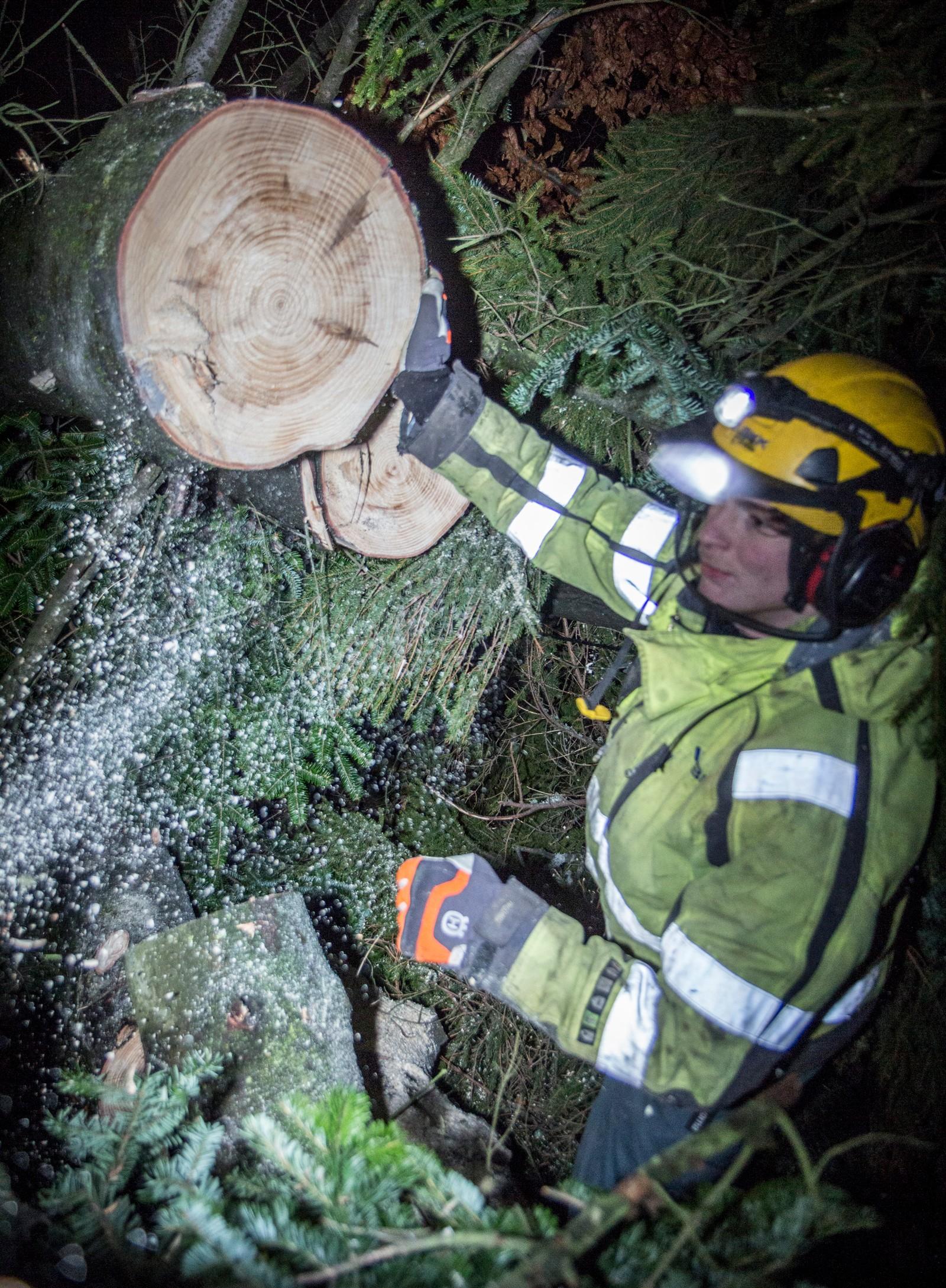 Mannskap fra BKK har ryddet bort trær fra strømledninger i natt og i dag. Dette er fra Heldal i Bergen.