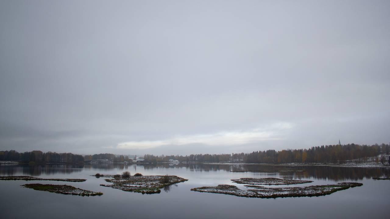 Fuglene trives på gressdekte vollene i Åkersvika.