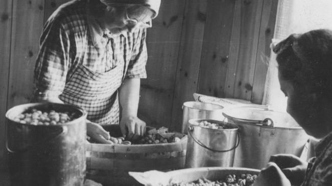 fakta om sogn og fjordane Grimstad