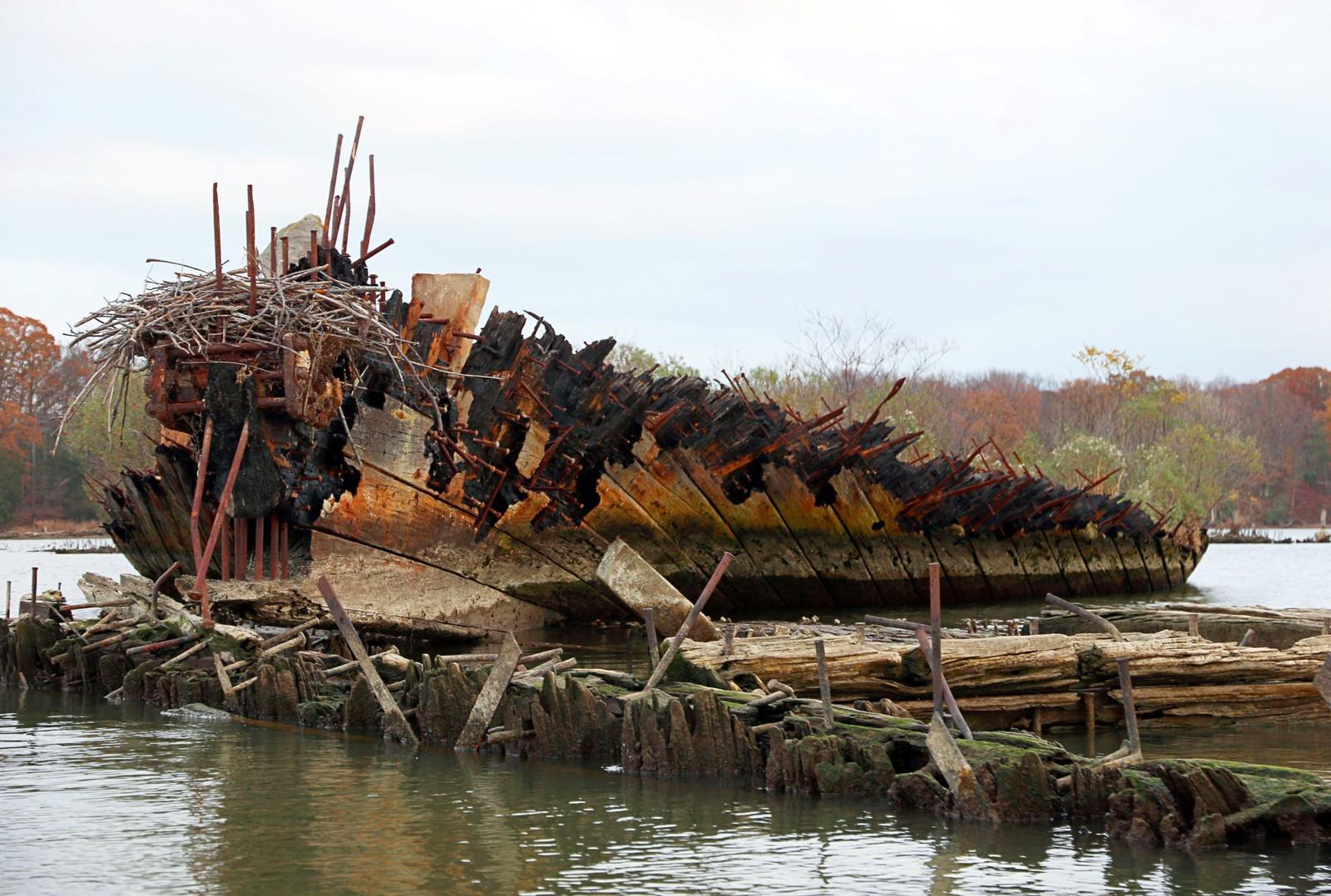 Skipsvrakene er i full oppløsning, men gir samtidig boplass til dyr og planter.
