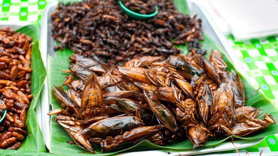 Insekter som middag