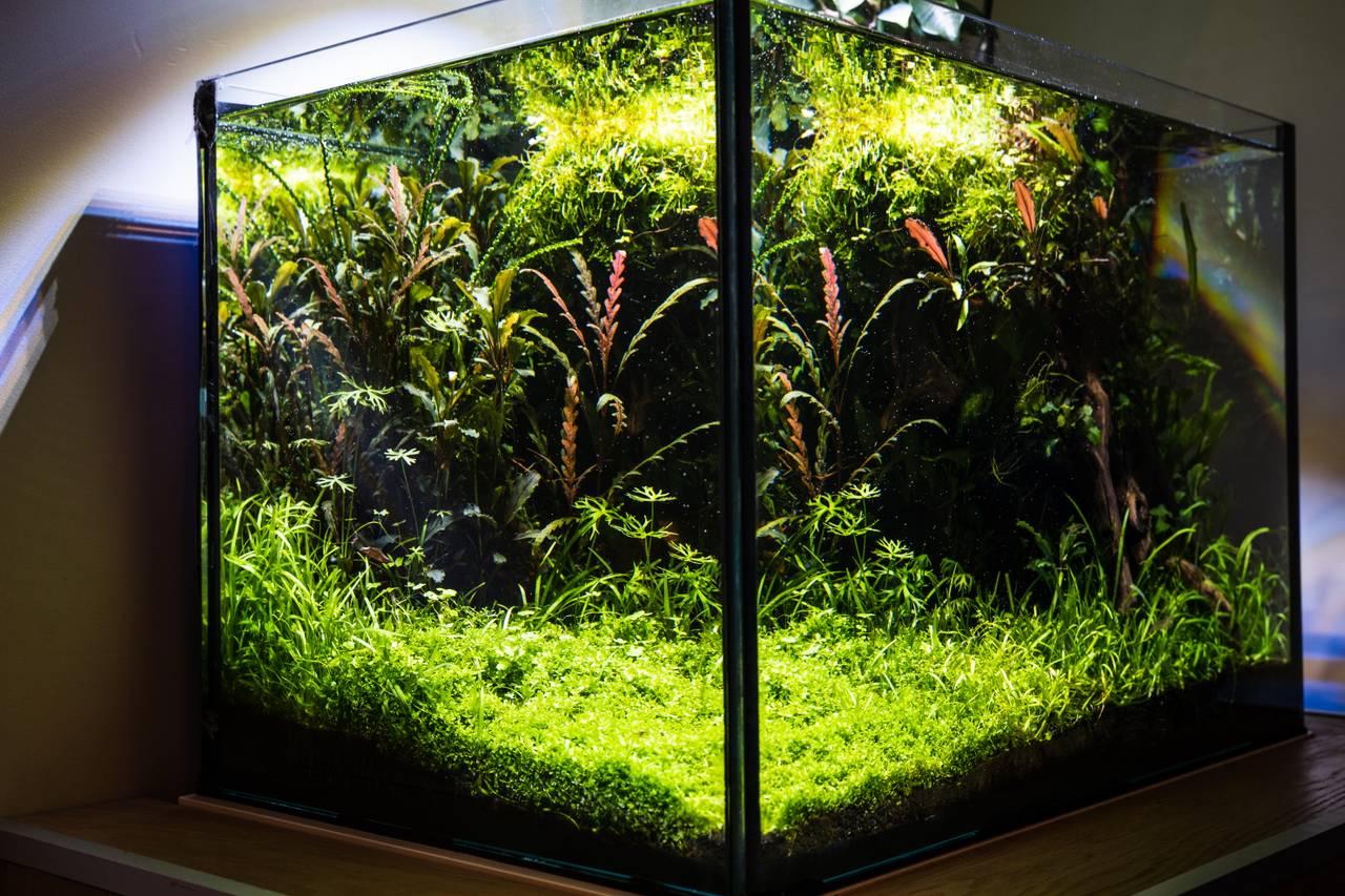 Akvariet til Mathias Estensen