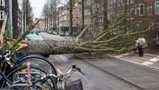 TRE TOK SCOOTER: En mann ser etter scooteren sin etter at den ble truffet av et tre under det kraftige uværet i Amsterdam, Nederland.