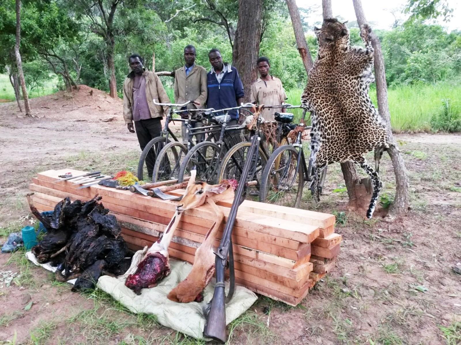 Arresterte krypskyttere i Kongo som ledd i UNEPs aksjon Rapid Respons