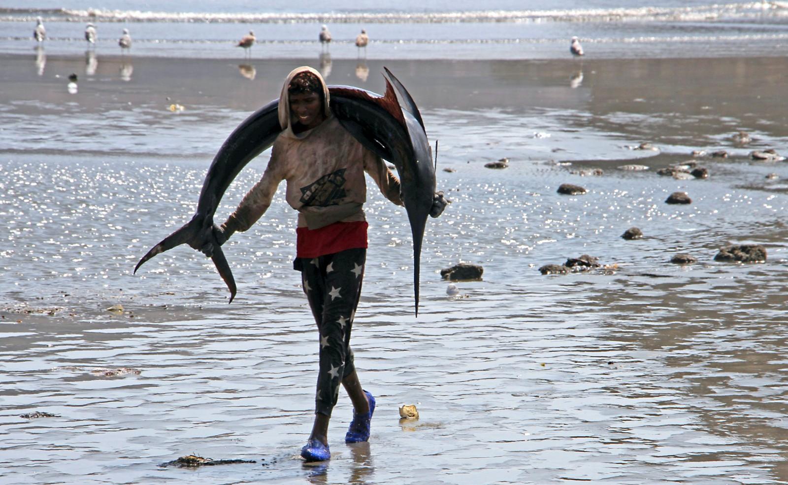 En fisker i Yemen med dagens fangst, en seilfisk, på vei til markedet.