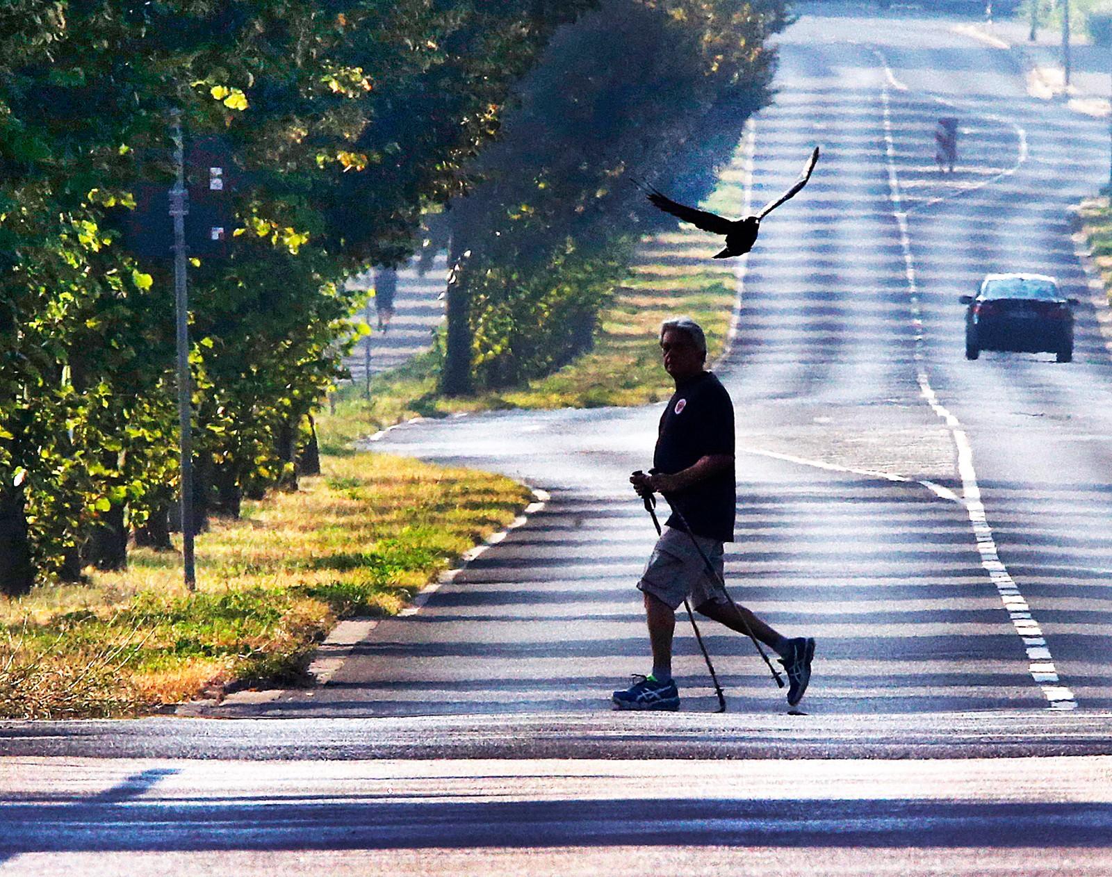 Hverdagsliv. Gående mann og flyvende fugl i Frankfurt i Tyskland den 2. september.