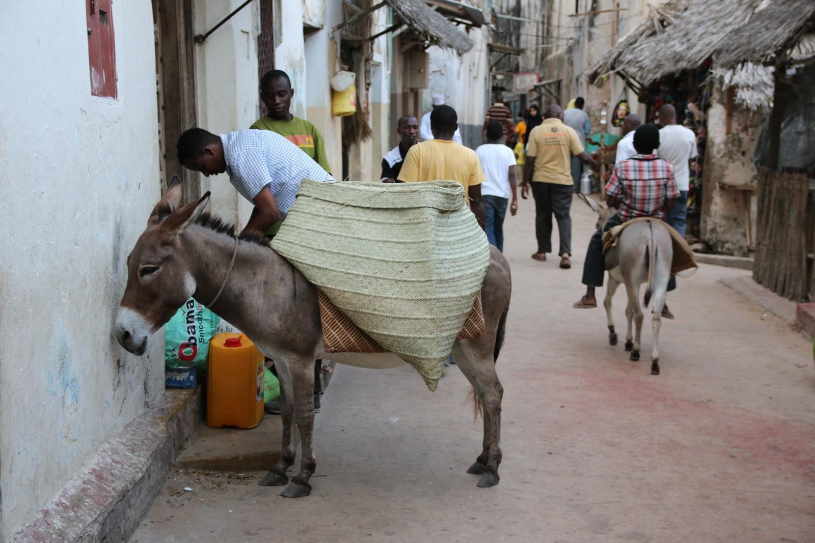 Lamu har verdens tetteste eselbestand i forhold til folketallet.