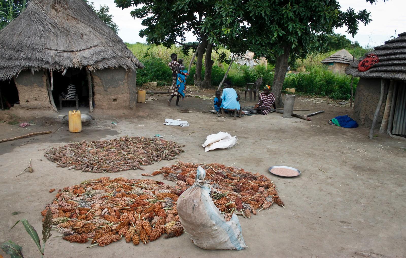Bøndene legger ut kornsorten durra. Den er viktig for folket som bor i Aweil, Sør-Sudan.