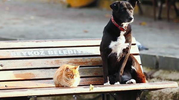 Hva er det beste kjæledyret?