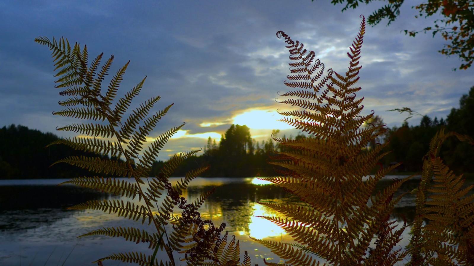Solnedgang ved Tømmerholtdammen