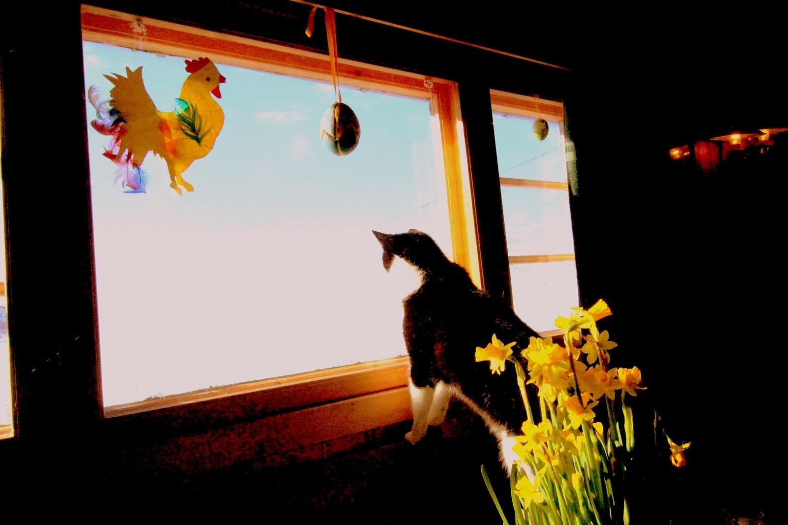 Pus kosar seg inne i hytta i påska, men må ha oversikt over det som skjer ute.
