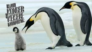 Blant konger og keisere i Antarktis