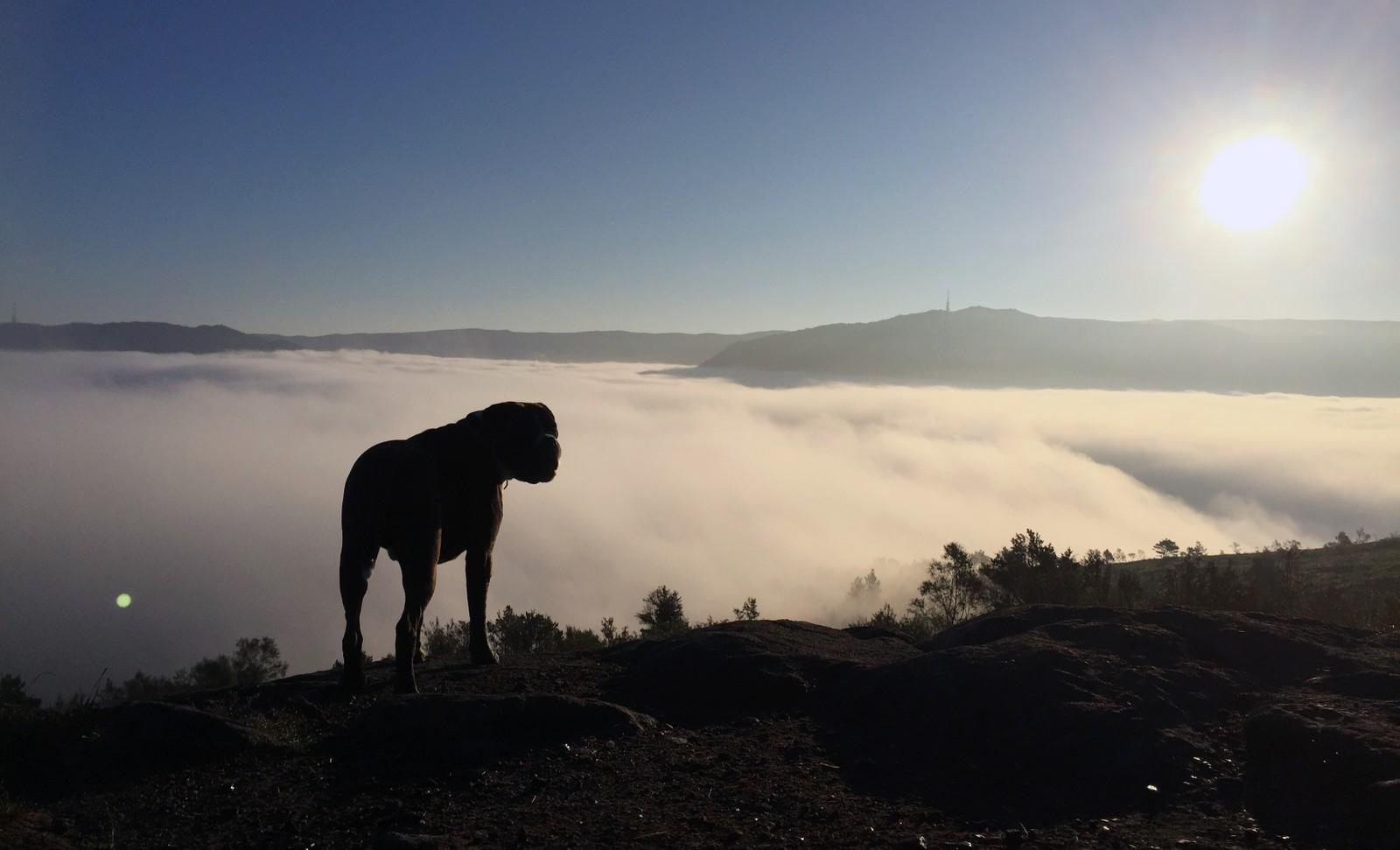 OPPLEV DET SAMME: Vil du oppleve det samme som Pål gjorde i dag, bør du stikke til fjells torsdag morgen. Da kan det bli samme type vær med sol og tåke i Bergen.