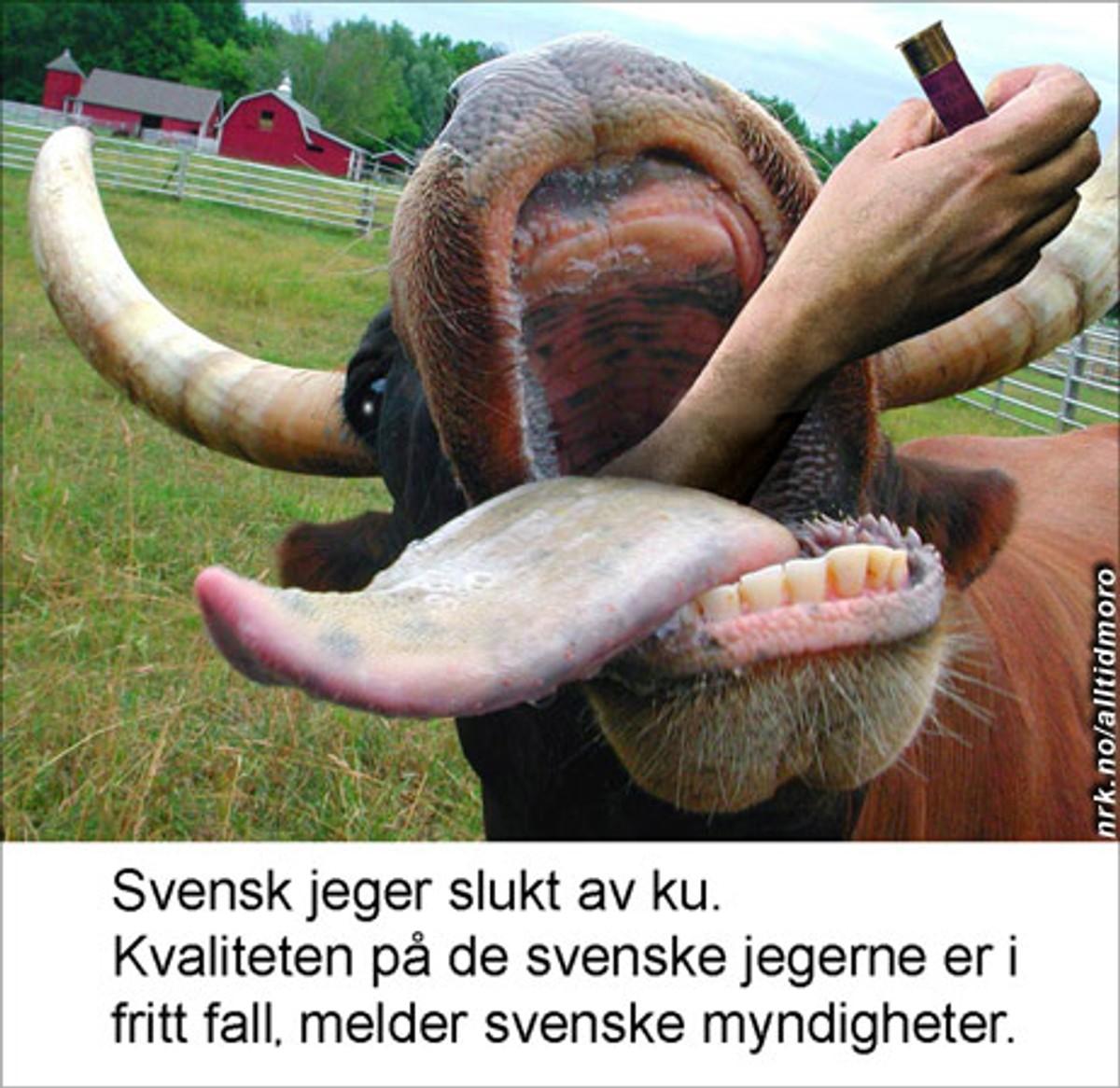 svensk pornografi singlar på facebook