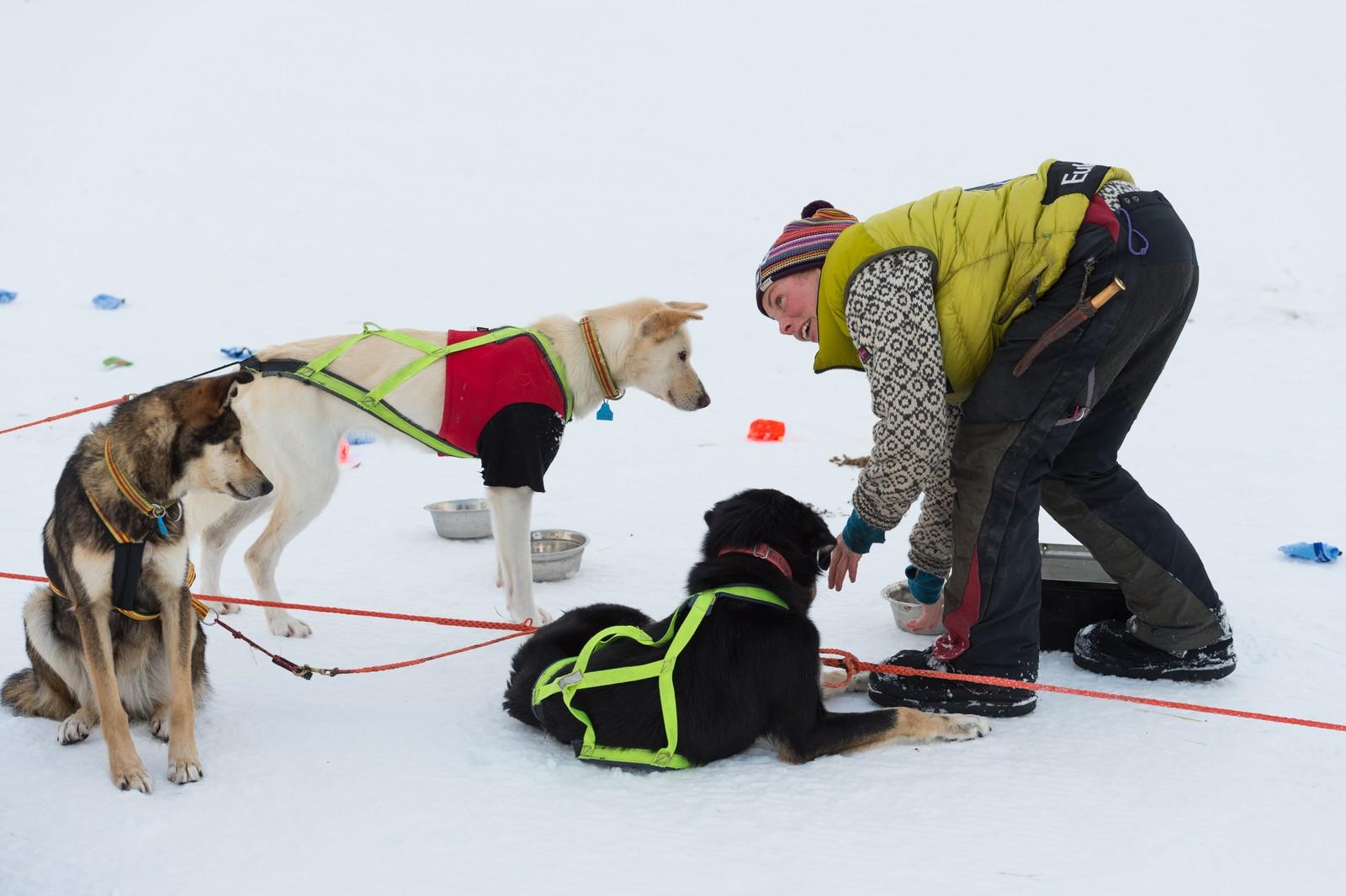 Sigrid Ekran steller hundene på sjekkpunkt Varangerbotn