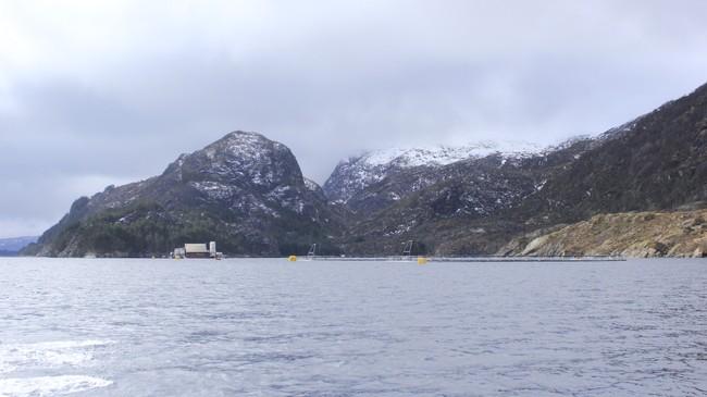 Fiskeoppdrett er mellom dei viktige næringsvegane i Askvoll. Dette er anlegget til Firda Sjøfarmer i Granesundet. Foto: Kjell Arvid Stølen, NRK.