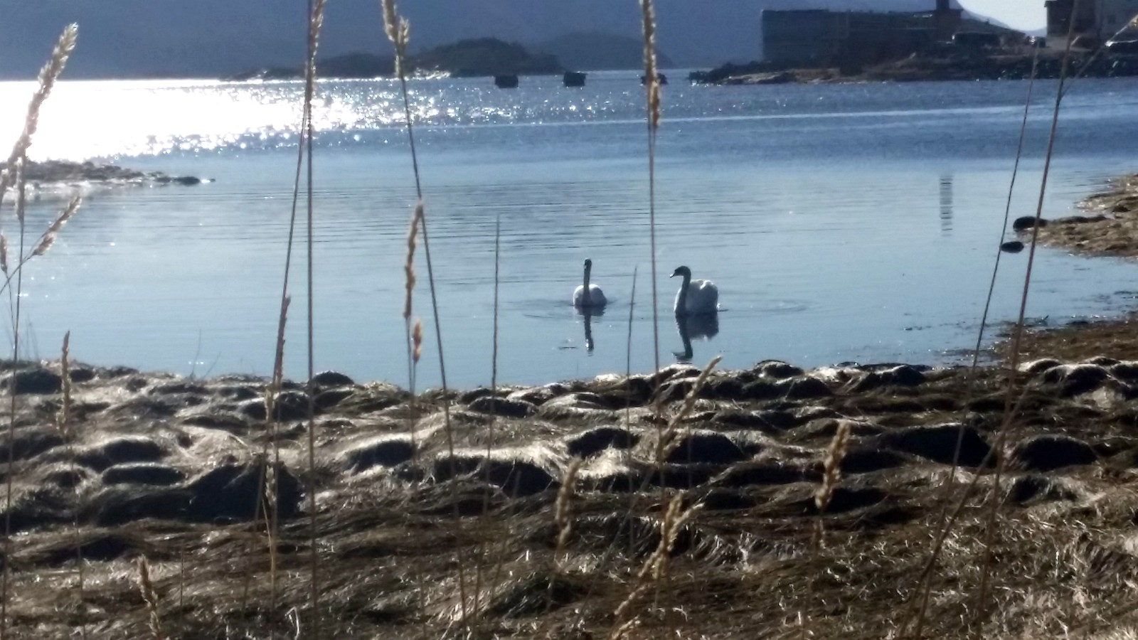 Vårfornemmelser på Monstad i Åfjord