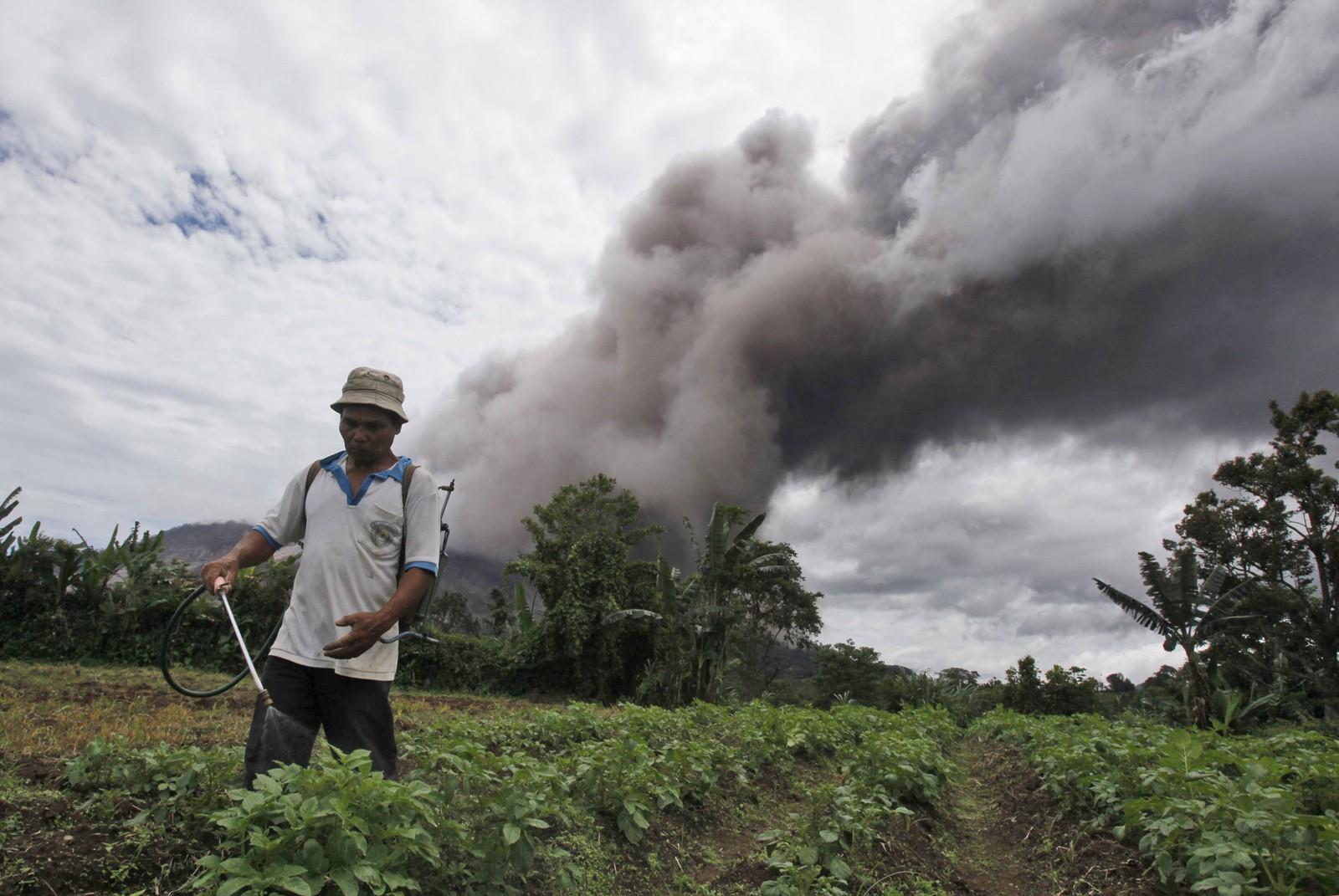 Yakti Sitepu, en lokal bonde, passer potetåkeren sin, mens asken flyr i luften ved Sinabung.