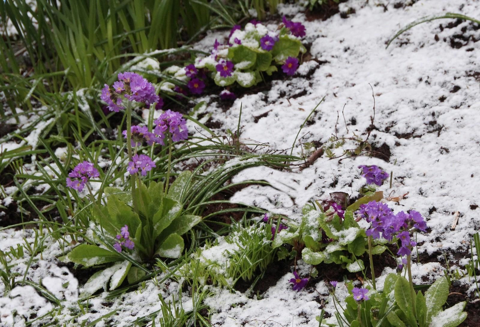 Vinteren kom på besøk 25. april 2017. Her fra Kopervik, Karmøy.