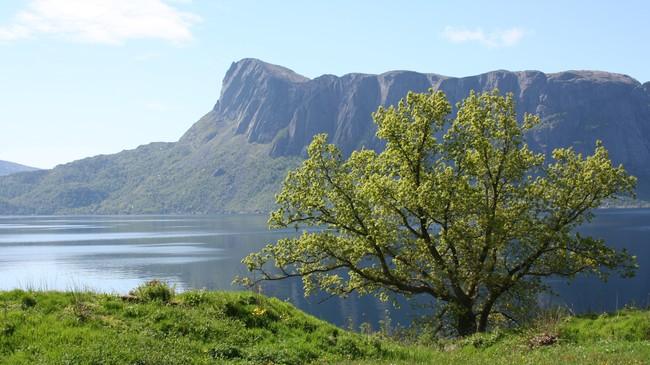 Lifjellet. Foto: Ottar Starheim, NRK