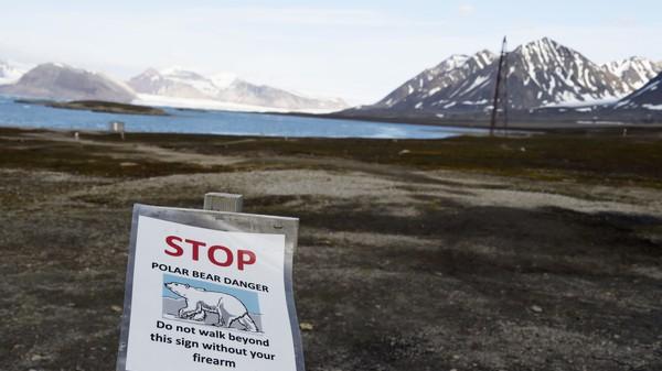I Arktis blir både vintrene og somrene varmere. Men på Svalbard er det først og fremst vintrene som blir mildere. Det får ifølge forskerne store konsekvenser for plantelivet.
