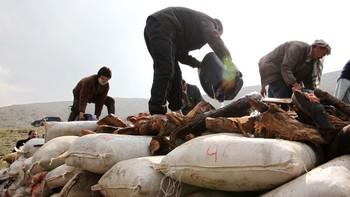 Narkobål i Afghanistan