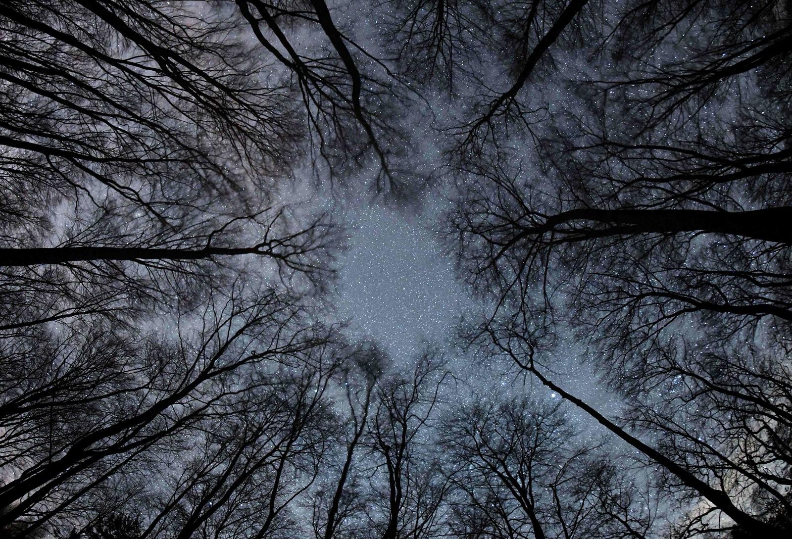 Stjernene blinker over en skog i Frankfurt i Tyskland.