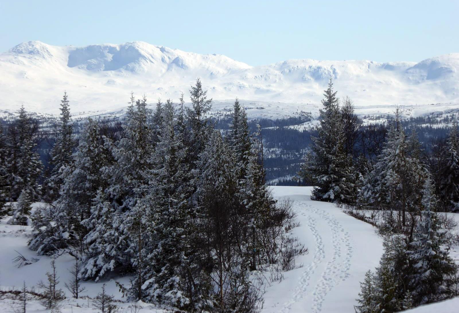 Fra Strætasfjell mot Skarvan.Stjørdal