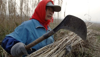 Kinesisk bonde